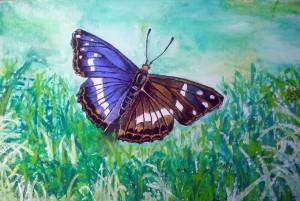 Ivo Pillai – Farfalla