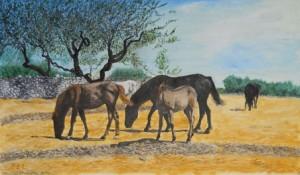 Emilio Lenne – Cavalli al pascolo sulla Murgia