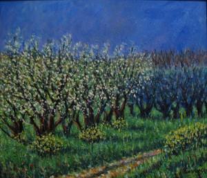 Sandro Mori – Ciliegi in fiore
