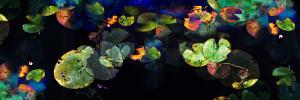Mario Rotta – Ninfee (a Monet)