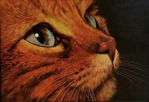 Rolando Conti – Occhi di gatto