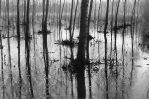 Massimo D'Amato – La pioggia