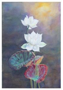 Alice Cappellari – Fiori di loto